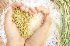 К чему снится рис — символ изобилия