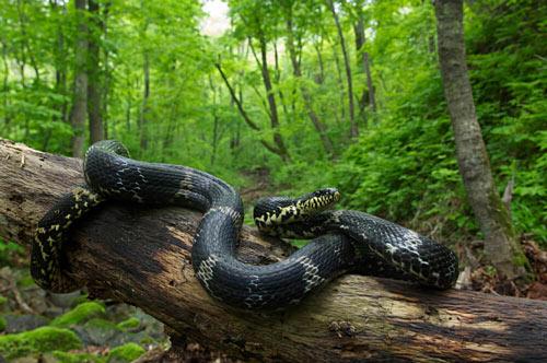 Видеть во сне огромных змей