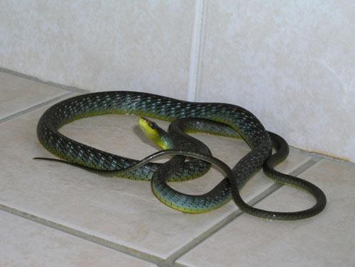 Видеть во сне огромных змей thumbnail