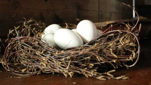 Сон к чему снятся яйца куриные много