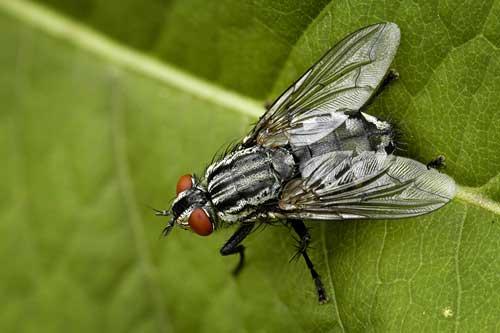 Сны толкование видеть мух