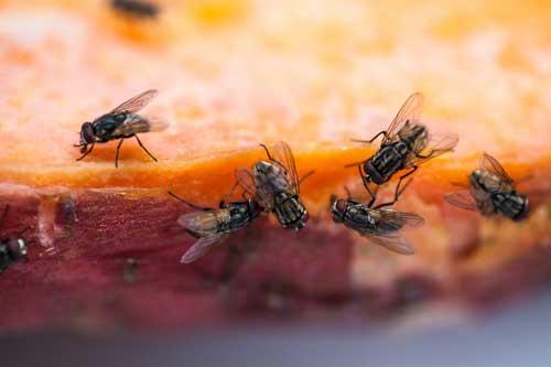 Что означает видеть мух во сне к чему thumbnail