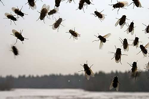 К чему снятся рой мух во сне женщине