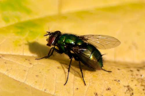 К чему снятся рой мух во сне женщине thumbnail