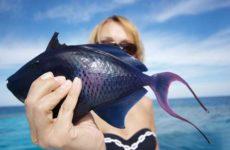 Рыба во сне — что значит сновидение