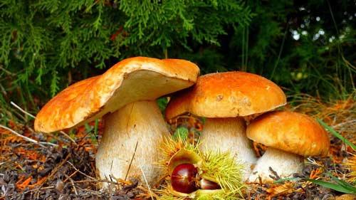 сонник собирать грибы на кладбище
