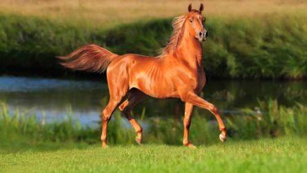 Приснилась лошадь — толкование сна