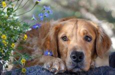 Собаки во сне – толкование